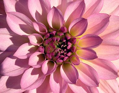 macro photography of a purple flower