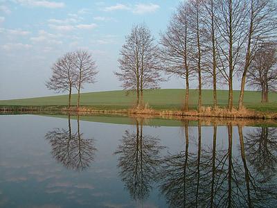 tree lineup beside body of water