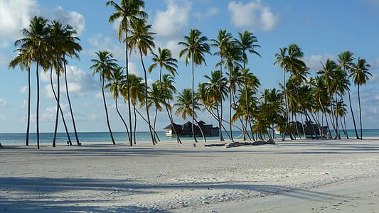 palm trees near sea