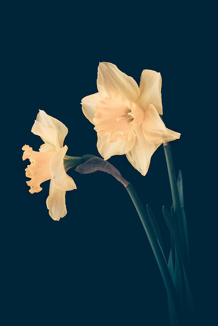 Royalty Free Photo Yellow Flowers In Blue Background Pickpik