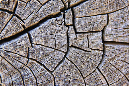 natural wood in close up photo