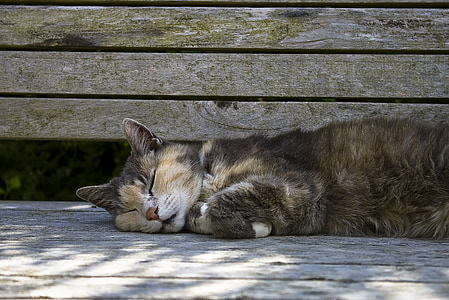 sleeping cat laying on gray wooden bench during daytime