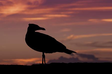 silhouette of bird during dawn