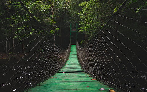 green wooden hanging bridge near green trees