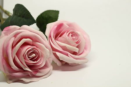 close-up photography of pink rose flowers