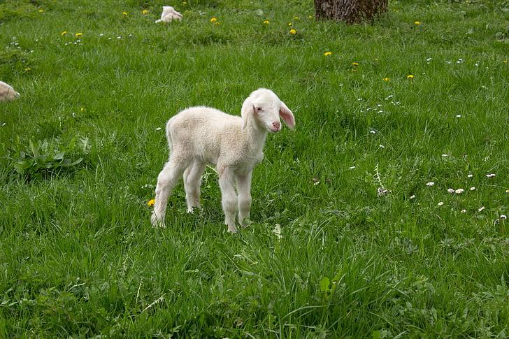 white kid standing on grass