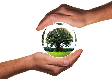 green tree on crystal ball in human palm