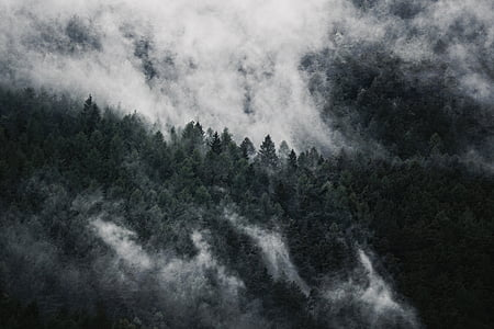 aerial view photography of green forest covered by fog