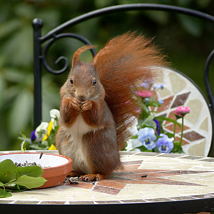 Chipmunk on top of table