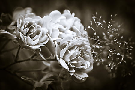 grayscale of flower