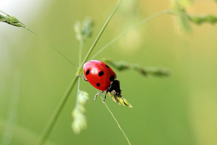 macro shot photography of lady bug