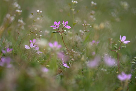shallow focus photography of purple flowers