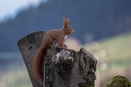 brown squirrel on tree stump during daytime