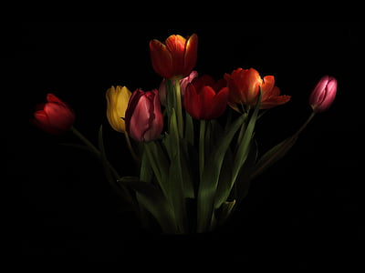 photo of red, orange, and yellow tulips
