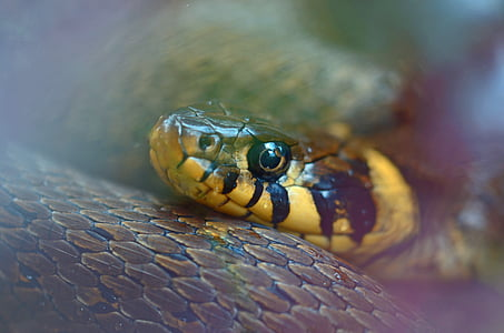 close view of yellow and brown snake