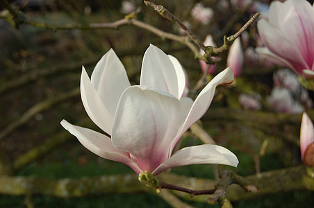 selective focus photography of white-and-pink petaled flower
