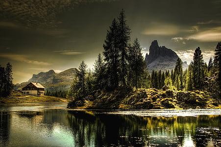 green forest field beside body of water