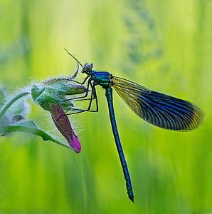 macro photo of blue damsel fly