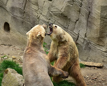 two bears fighting during daytime