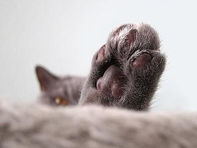 closeup photo of cat's paw