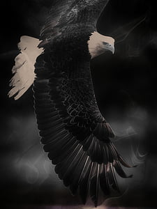 grayscale photo bald eagle digital wallpaper