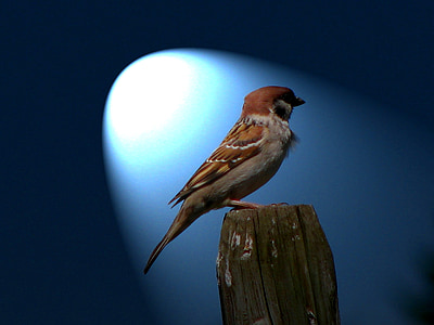 brown and white bird on brown wood