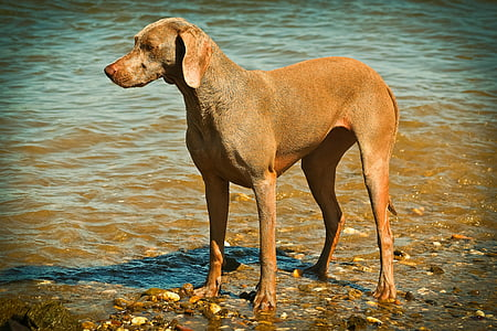 brown hound on shore
