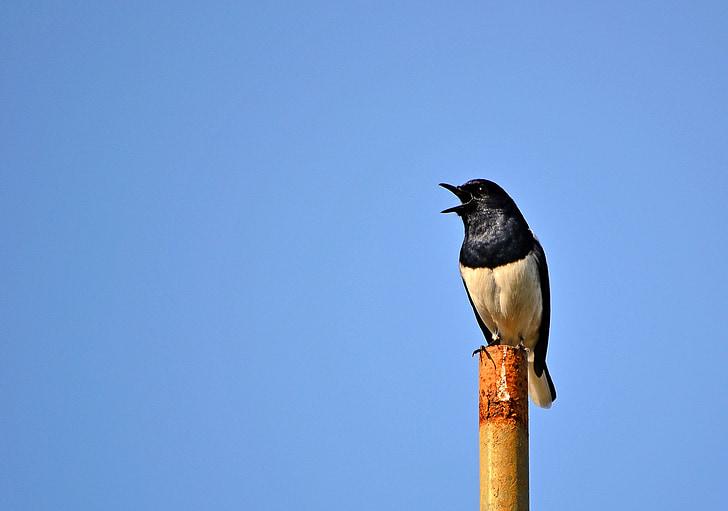 white and black bird on pole