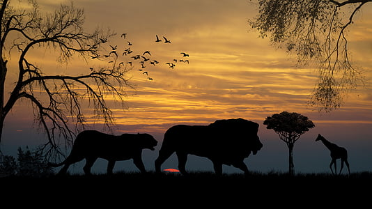 silhouette of lion, tiger, and giraffe