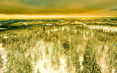 snowed green leaf trees under gray clouds at golden hour