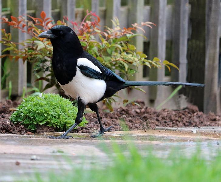 blacck and white bird on ground