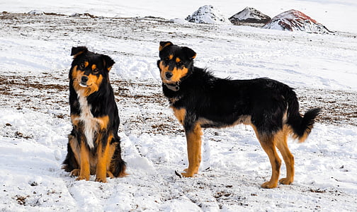 two medium short-coated tan and black dogs