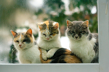 shallow focus photography of three Calico cats