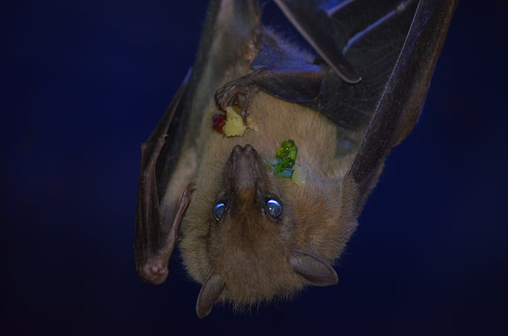closeup photography of brown bat
