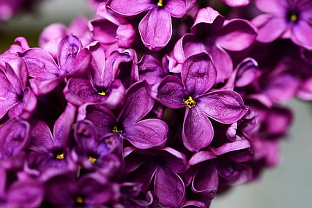 purple 4-petaled flowers
