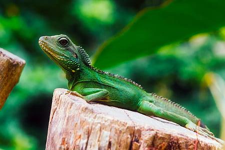 green lizard on top of log