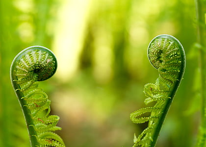 micro photography of green plant