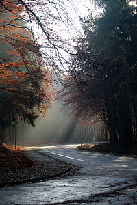 empty curved road surrounded with trees during day