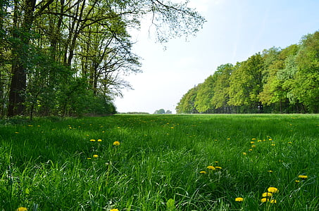 green grass field surrounded trees