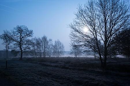 scenery of bare trees