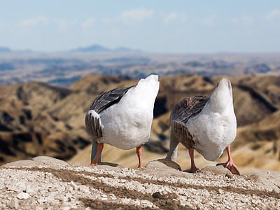 two white-and-black birds stand on rock