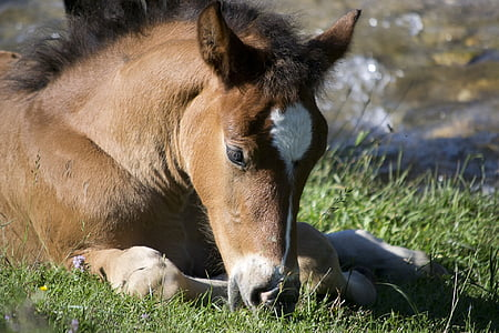 brown horse laying on grass