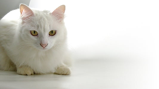 white cat on white panel