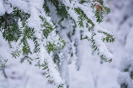 photo of snow coated tree