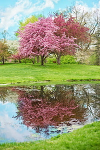 photo of pink petaled tree near body of water