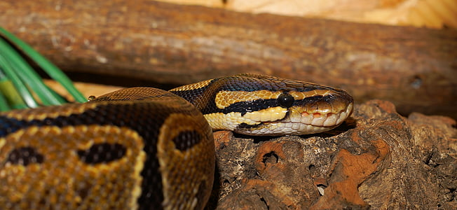 close photography of brown snake
