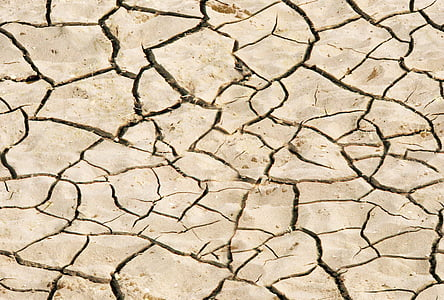 closeup photo of dried soil