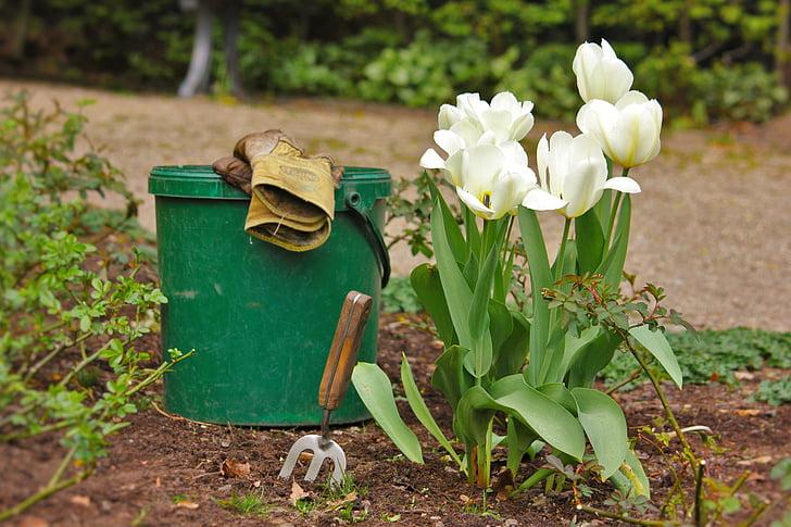 white tulips in bloom beside green plastic pail