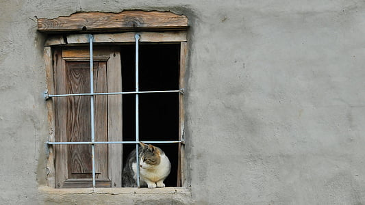 cat sitting on windowpane