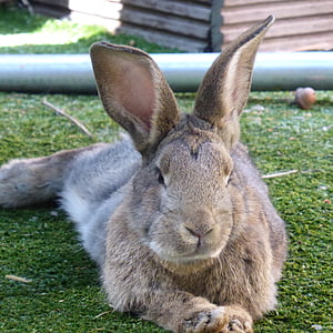 brown rabbit lying on green grass field during daytime